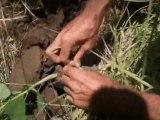 GILLES plantait des arbres- PART 3