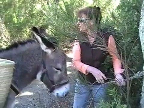 randonnée avec des ânes