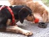 Gretel (le chien) joue