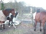 16.02.2011 Retour du degré 2 La Cense
