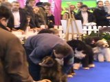 Les chiens d'eau: des chiens qui montent