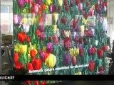 Ecran géant LED vitrine 7m² (pitch 6mm - 2500 cd/m²)