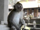 Monkeys of Ubud, Bali, Indonesia (3 of 8)
