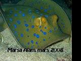 séjour plongée , Marsa Alam, mars 2008