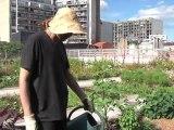 Nature en ville : les jardins du béton