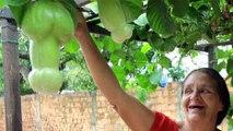 L'arbre qui fait des fruits en forme de quéquettes...