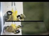 nos amis les oiseaux
