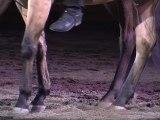 Carnevale Romano, la sfilata dei cavalli a piazza del Popolo