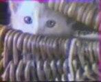 pub - comité contre les chats