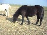 Poulain, chevaux, poneys 04/03/2011 SDC10332