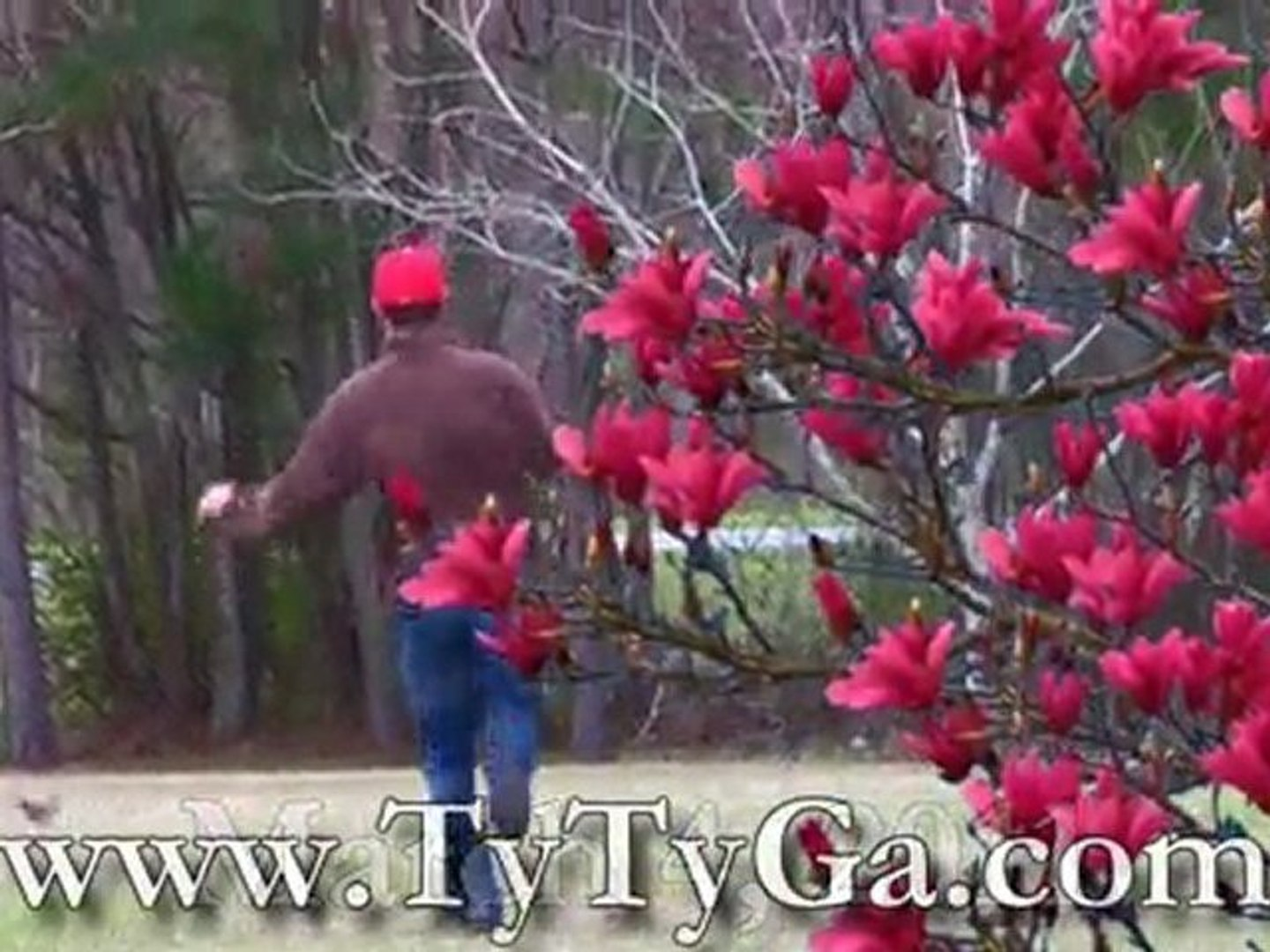 Ty Nursery Red Flowering Magnolia