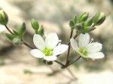 ONF Calanques : la protection de la Sabline de Provence