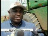Récolte des maïs cultivé par l'IPHD à Loudima