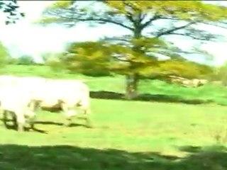 03 Une trompe pour les vaches
