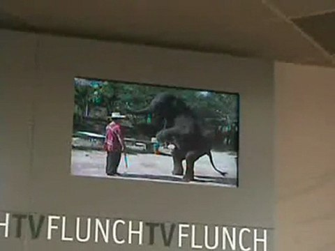 Flunch_elephant_martyr