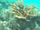 Belize Caye Caulker plongée sur Hol Chan Marine