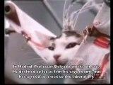 José Delgado - aime les animaux surtout les chats