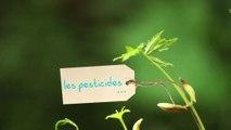 Claude Bureaux : jardiner autrement en réduisant l'usage des pesticides