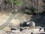 Un ours polaire de 4 ans meurt sous les yeux des visiteurs_