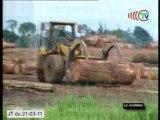 Brazzaville va abriter une réunion sur l'industrie du bois au Congo.