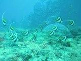 Diaporama en Nouvelle-Calédonie. Les photos sous-marines sont prises en apnée par Stéphan Peretti. Bande originale : Lou Reed.