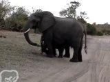 Éternuement bébé éléphant
