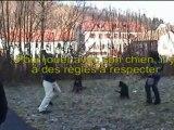 Dressage et analyse du comportement des chiens