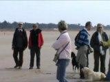 Rassemblement Inter Régions Balade Ton Chien 2011 - Pause en bord de mer