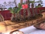 Exhibition of Unique Bonsai Varieties Held in Central India