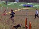 Epagneul breton, agility, TaIga, concours jarny 3/4/11 - open