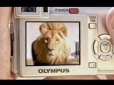Grisly lion attack on tourist bus / Olympus