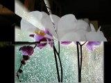 Richard Clayderman   Flowers Flowers Flowers