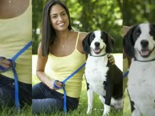 The best collars for dog and pet
