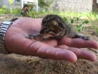 Сад и котята