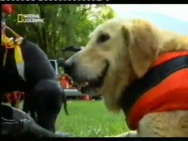 Perros salvavidas: Zoe   Godialy.com