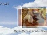 sakusaku 110412 3 平成22年度みんなでうたおうZ大賞 ♪ネコのバラード