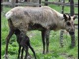 Tiere im Wildgehege Hellenthal