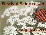 diaporama photos d'insectes 3 / Festival Sciences et Fictions  - Cavaillon 2011