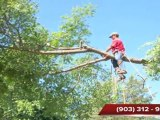 Flower Mound Tree Trimming Lewisville Storm Damage