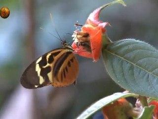 l'envol des papillons, butterflies, mariposas, schmetterlinge, farfalle