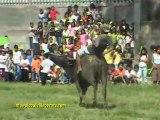 CARABAO (BUFFALO) RACES, CEBU, PHILIPPINES