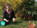 Ferme bio : élevage de poules
