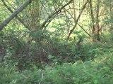 19.04.2011 Visite du parc du domaine, les animaux se baladent en dehors des temps de chasse
