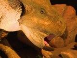 Londres: les dinosaures à l'assaut du Musée d'Histoire Naturelle
