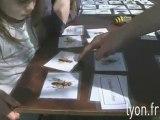 Des abeilles sauvages à Lyon