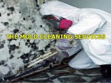 Get The Best Mold Cleanup Utah