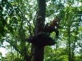 Oxygène, la radio du sud seine et marne! Premiere emission dans les arbres, au parc lemurien!