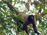 Manu Biosphere Reserve-Peru Amazon-Tour Operator Manu