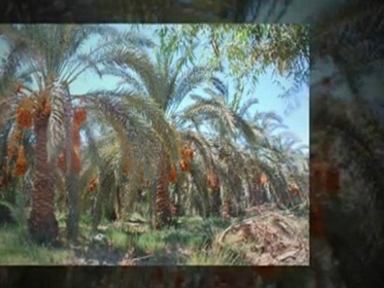 Egypt Desert & Culture Tours