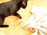2011/05/04 - Fufu et l'herbe à chat